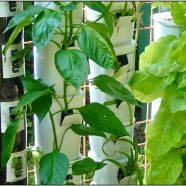 Super DIY: Intro to Vertical Gardening